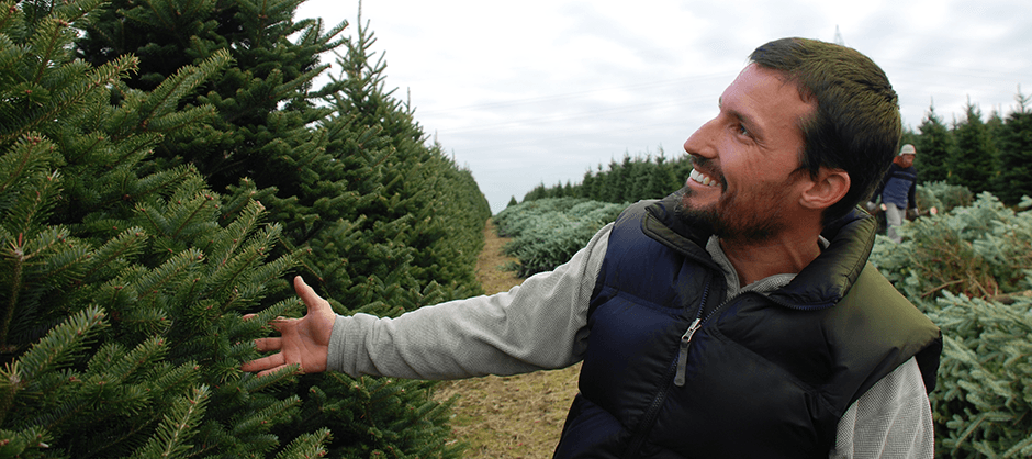real christmas tree care instruction