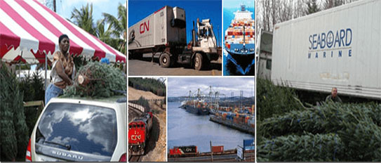 christmas tree containers exportation