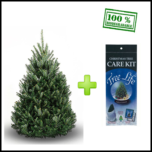 How To Take Care Of A Real Christmas Tree.Balsam Fir Christmas Tree Real Christmas Tree