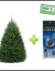 Fraser fir christmas tree care kit