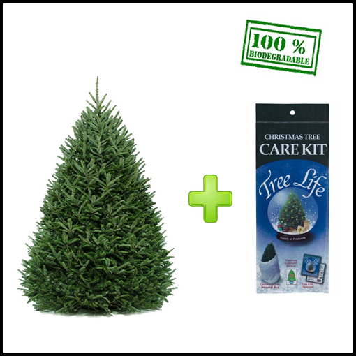 Fraser fir christmas tree care kit - Fraser Fir Live Christmas Tree - Christmas Tree Shop